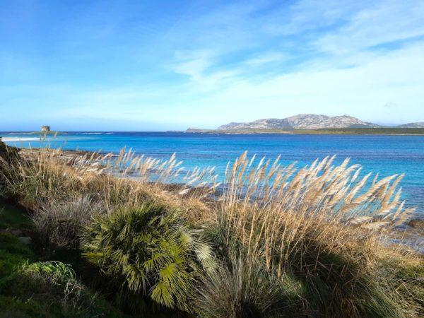 Asinara, l'île du diable devenue paradis